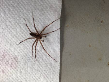 UBB Message - Brown Recluse Spider Discussion Forum